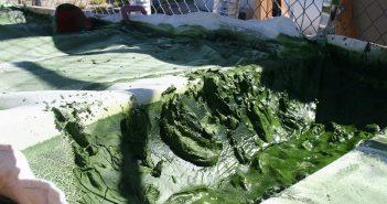 Биодизел от водорасли