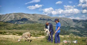 Училище за овчари