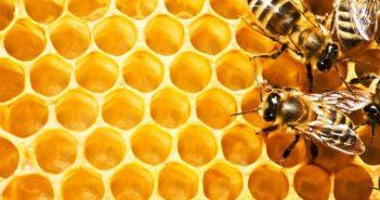 Пчелни гнезда