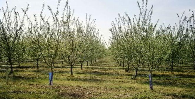 Овощните градини в страната са нараснали почти двойно