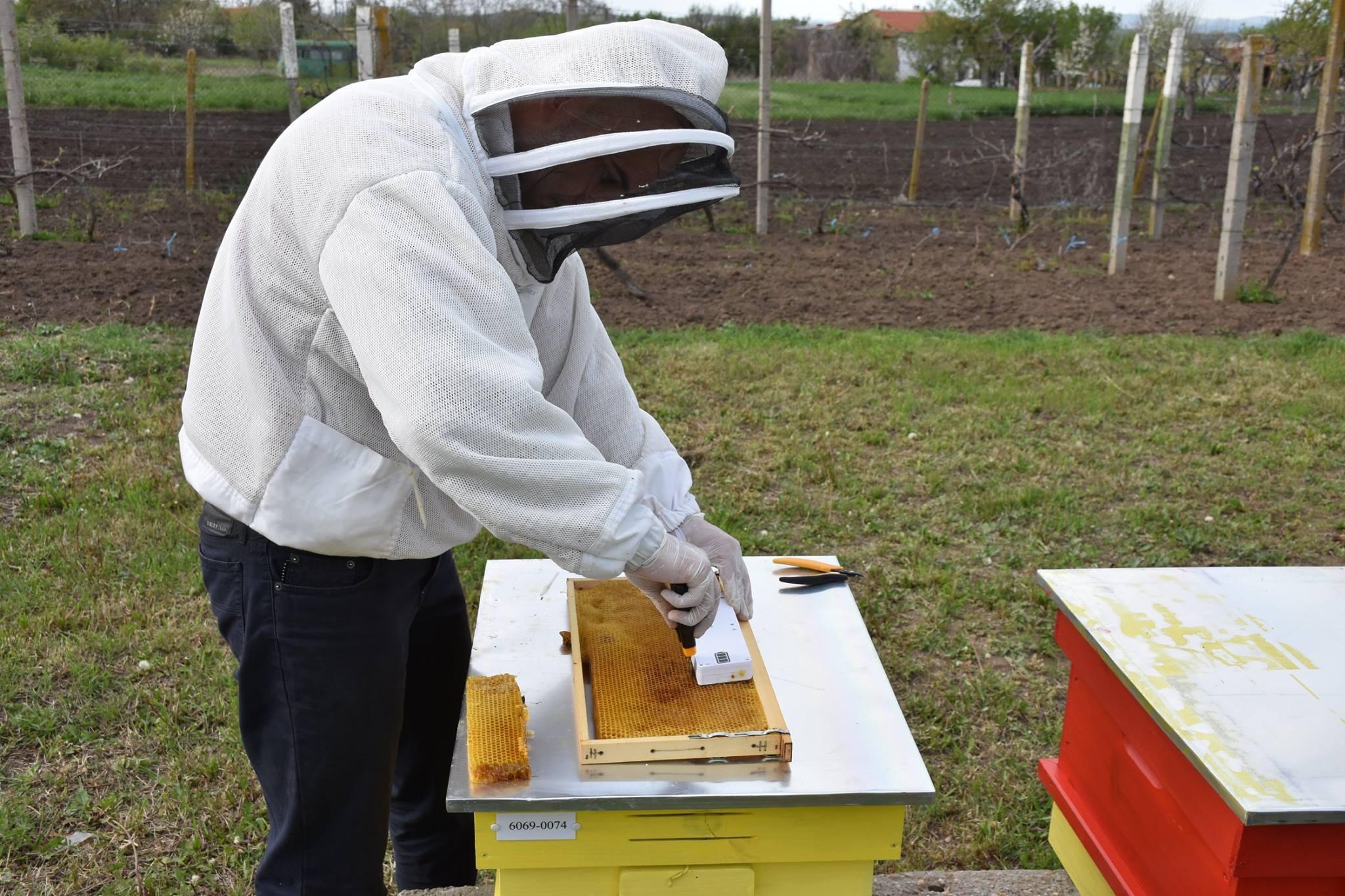 Сензорни станции за наблюдение на пчелина