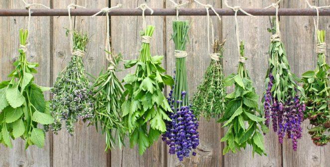 Отглеждане на билки и подправки у дома