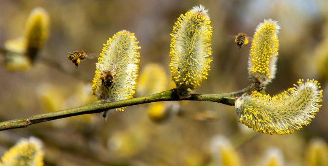 Време е за главния пролетен преглед на пчелина