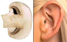 Гъба ухо