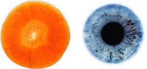 Морков око