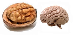 Орех мозък