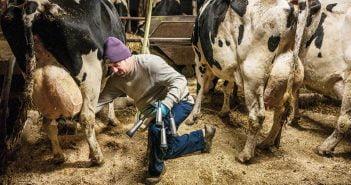 Производство на мляко