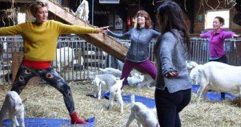 Йога с кози