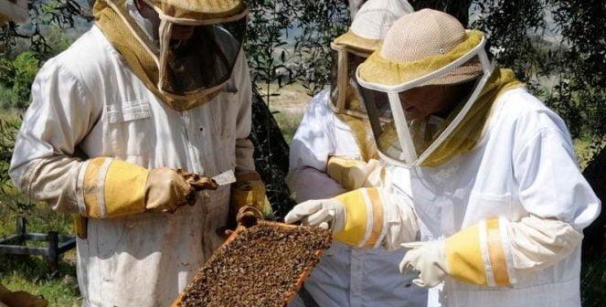 Грижи за пчелите през юли