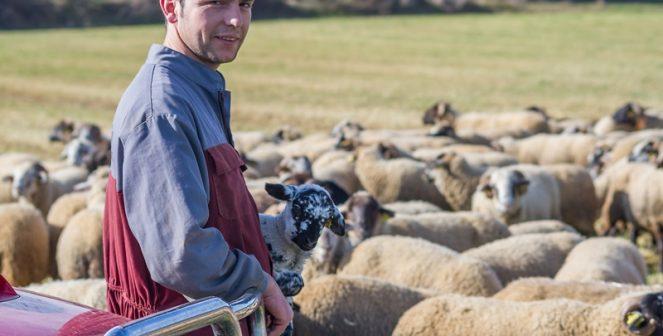 Повишаване на млеконадоя от овце