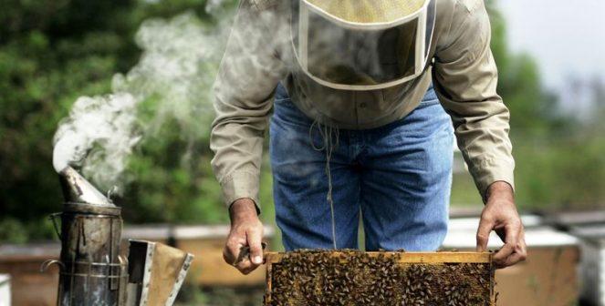 Как да подпомогнем слаби и осиротели пчелни семейства