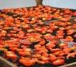 Преработка на плодове и зеленчуци