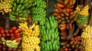 Червени и зелени банани