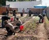 В търсене на земя стопани отвориха ферма в градски парк