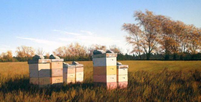 Осигурeте пълен покой на пчелните семейства през ноември