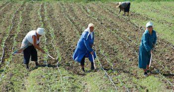 Засаждане на зеленчуци