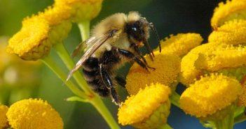 Пчели