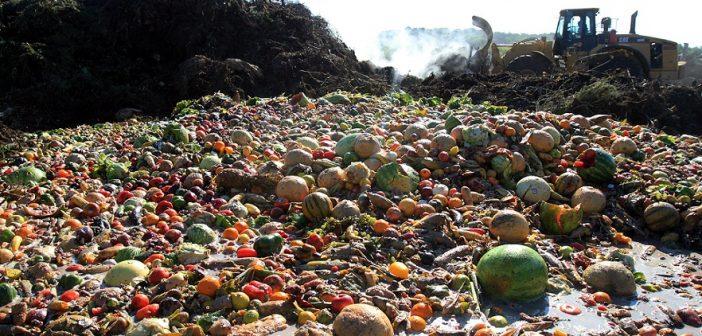 Храна на боклука