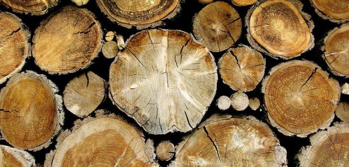 Дървесина