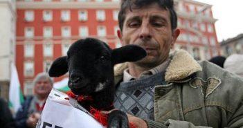 Протест животновъди