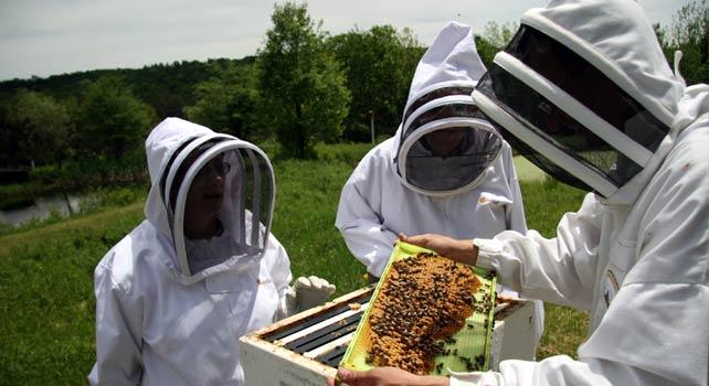 Пчелари