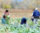 Пускат парите по de minimis за плодове, зеленчуци, винени лозя и рози