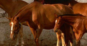 кабиюк коне