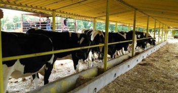 Изложение по говедовъдство