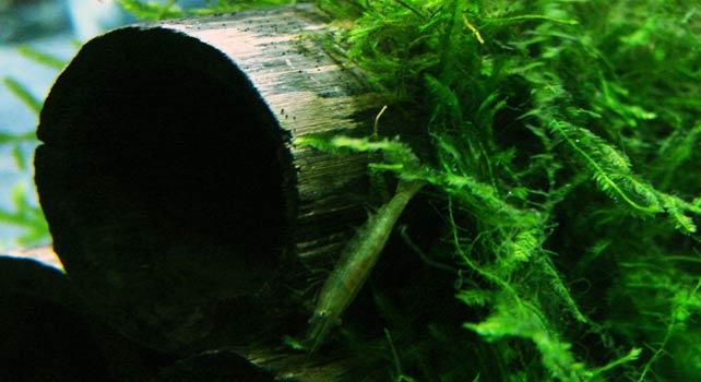 Ферма за водорасли