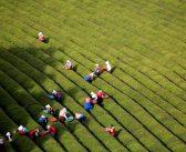 850 000 европейци работят сезонно в земеделието на чужди държави