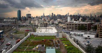 Градски ферми