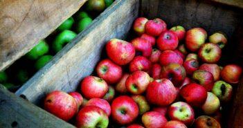 Производство на ябълки
