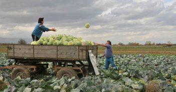 Схема дребни земеделски стопани