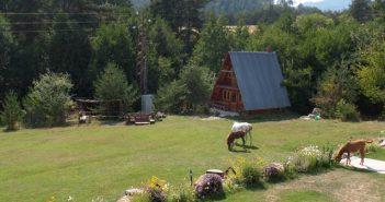 Конна езда, Бачево