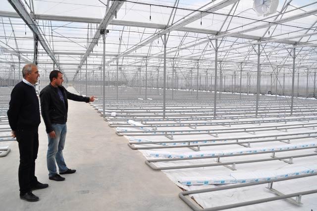 Оранжерия за краставици Минерални бани