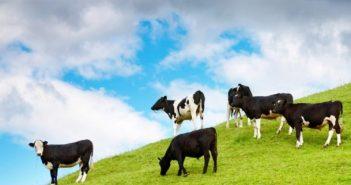 Млечни ферми