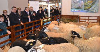 Френски породи овце