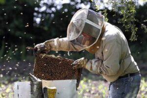 Пчелар