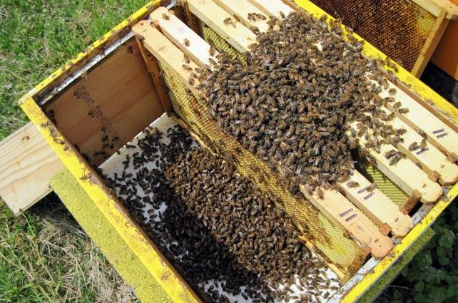 Пчелно гнездо