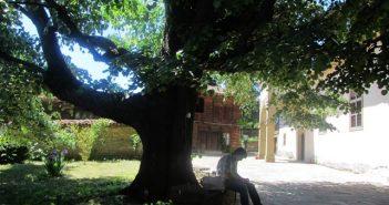 Столетни дървета