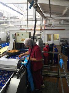Фабрката за череши на Санторелли в Катуница