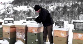 Пчели през зимата