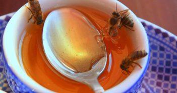 Подхранване на пчелите