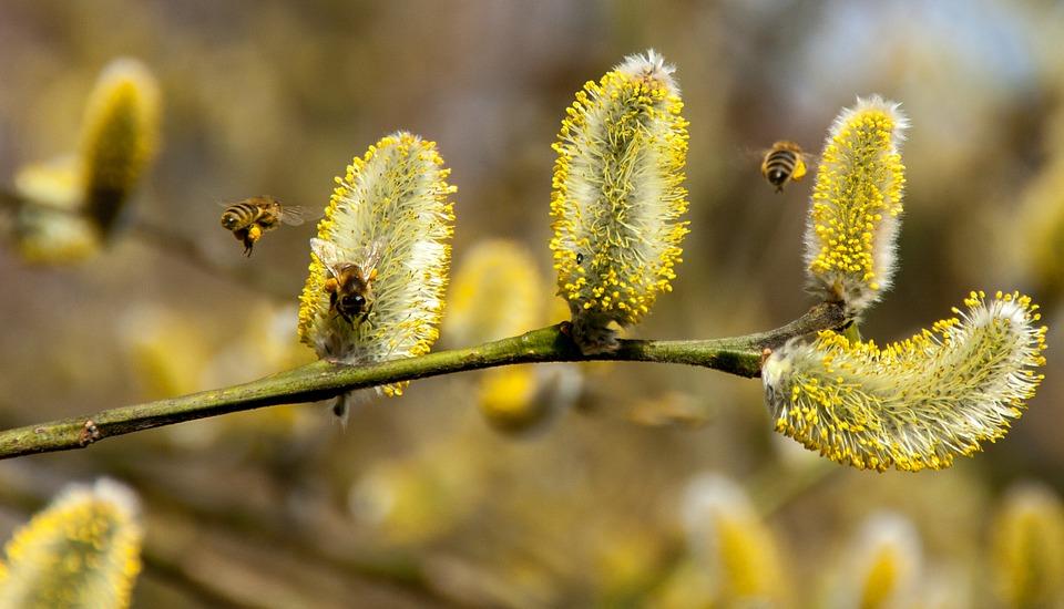 Пролетен преглед на пчелина