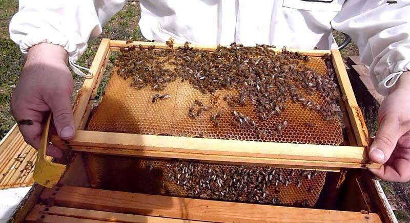 Пролетна инспекция на пчелните кошери