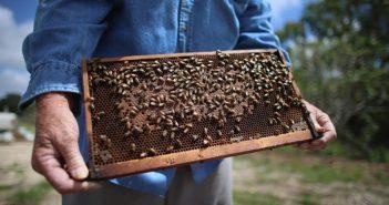 Грижи за пчелите