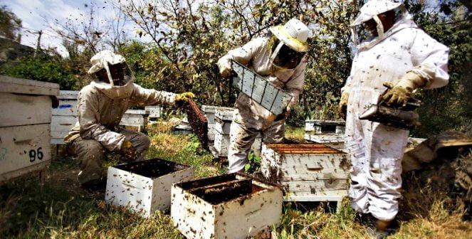 До 16 август пчеларите могат да подават заявление за плащане по НПП