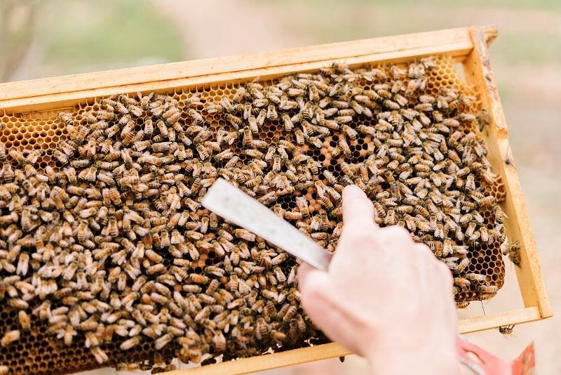 Пчелни семейства