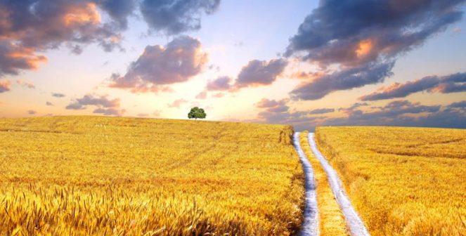 4 сценария за българското земеделие и храни след ковид пандемията