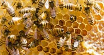 Отделяне на восък от пчели